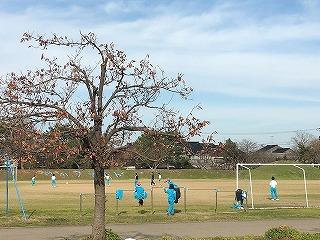 鉄棒やサッカーをしています。